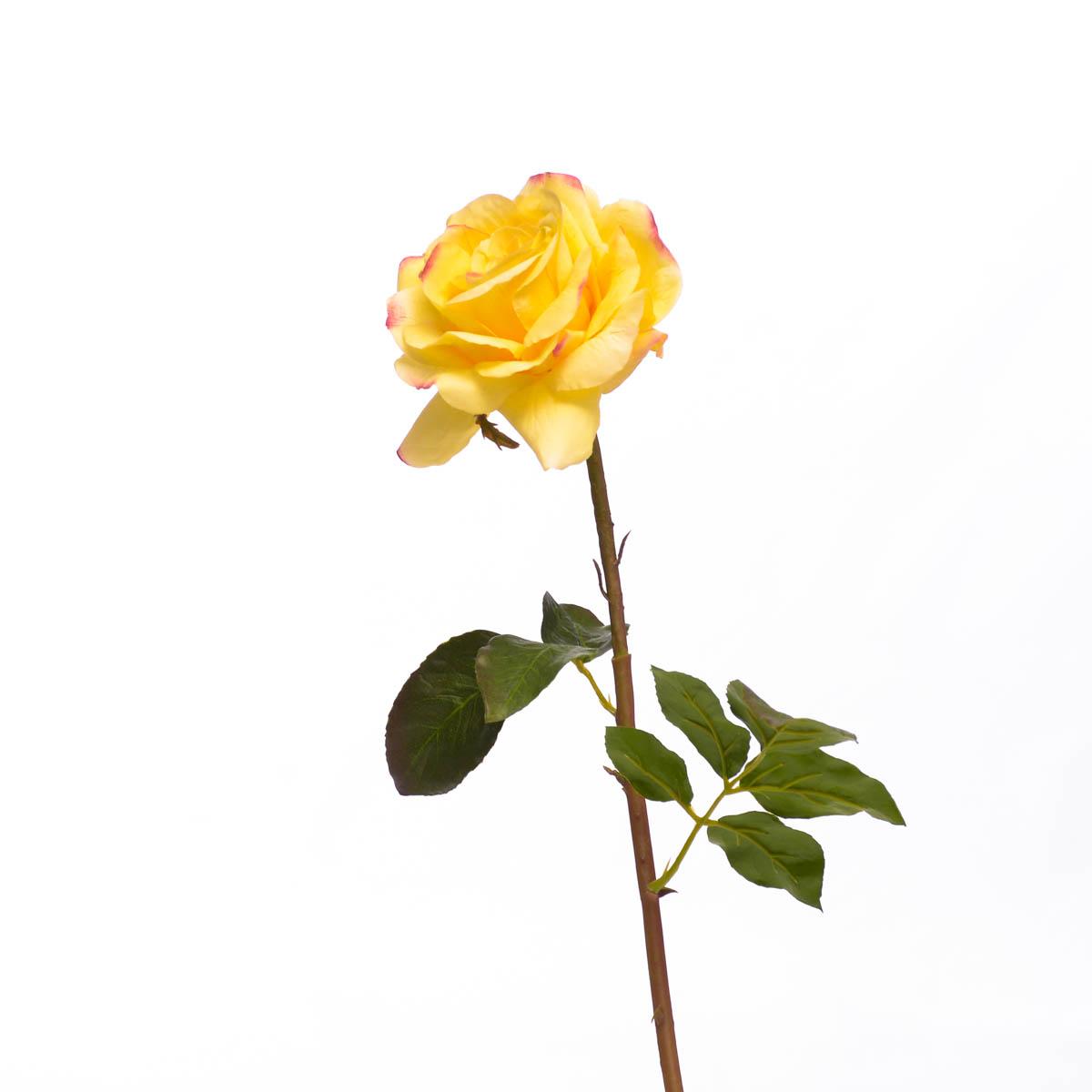 Flor rose Dutches Open Short Stem S  20,5