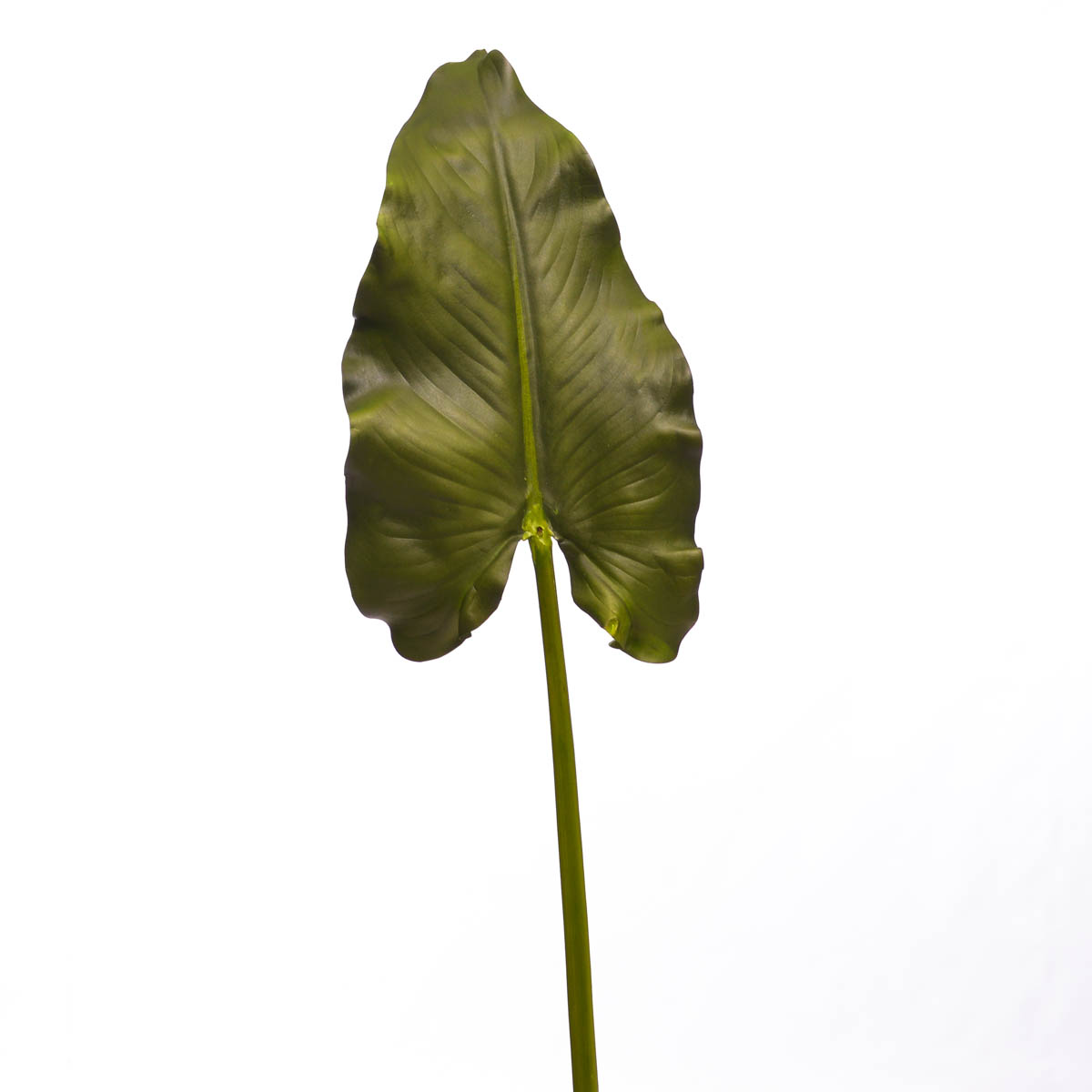 Flor Calla Leaf Giant 51 5