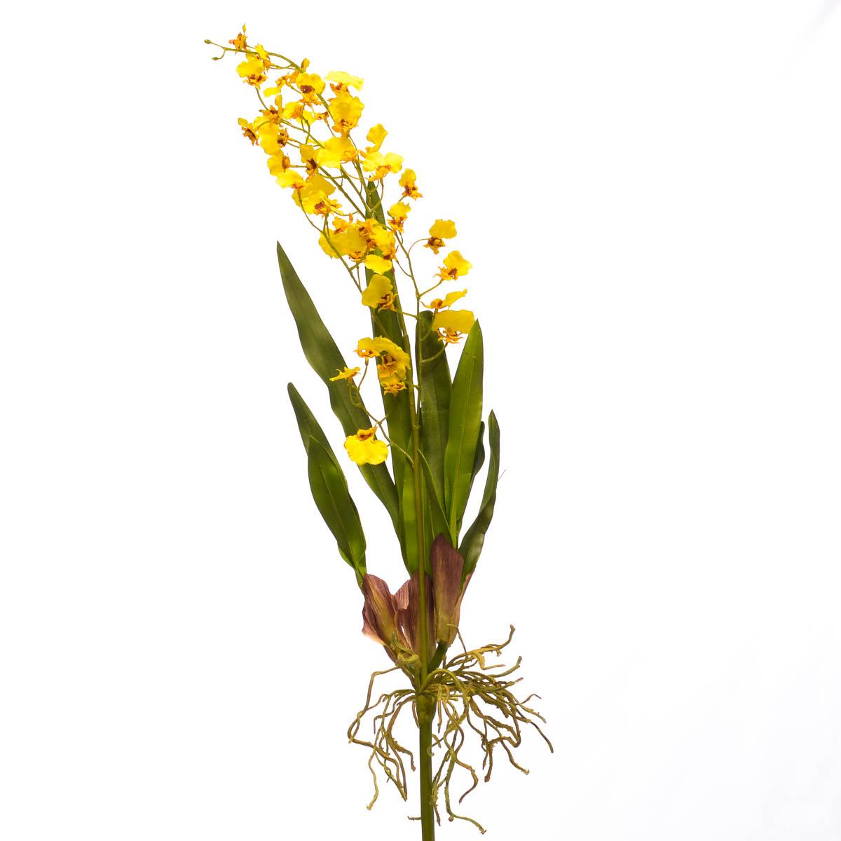 Flor Orchid Dancing Oncidium Plant S. 29